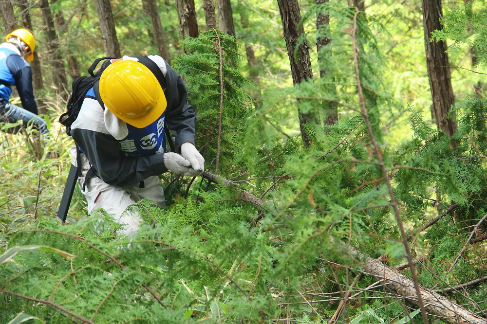 森林保全ボランティア